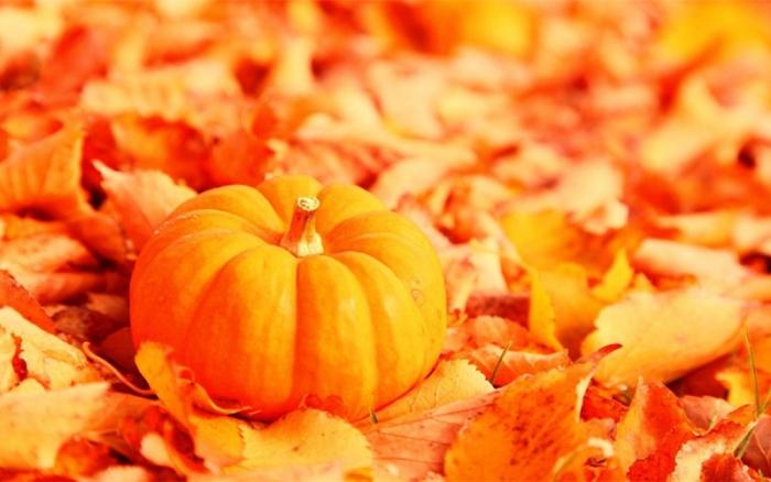 Рецепты блюд из тыквы осенью